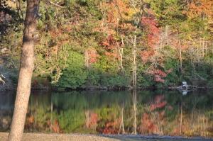 Alabama Timber
